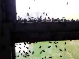 Flies! - YouTube
